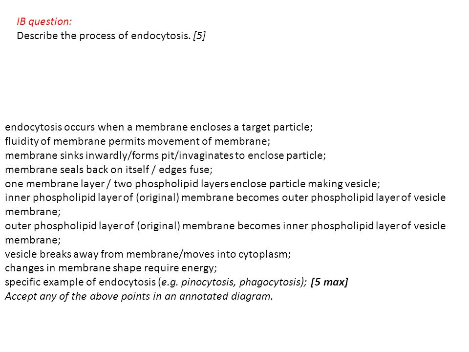 IB question: Describe the process of endocytosis. [5] endocytosis occurs when a membrane encloses a target particle;